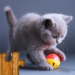 Cats Jigsaw Puzzles Games – For Kids & Adults 😺🧩 MOD APK 28.0