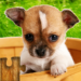 Dogs Jigsaw Puzzles Game – For Kids & Adults 🐶 MOD APK 22.0