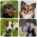 Dog Breeds – Quiz about all dogs of the world! MOD APK 1.98