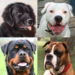 Dogs Quiz – Guess Popular Dog Breeds in the Photos MOD APK 1.2