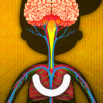 How does The Human Body Work? MOD APK