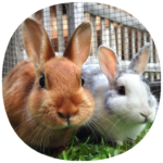 How to Take Care of a Pet Rabbit (Guide) MOD APK 1.5
