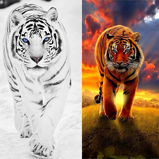 Tiger Live Wallpapers MOD APK 1.0