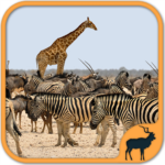 Animals Puzzle Zoo free – games for all ages MOD APK 5.22.020