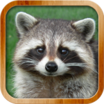 Kids Learn About Animals MOD APK 8.1