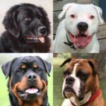 Dogs Quiz – Guess Popular Dog Breeds in the Photos MOD APK 3.1.0